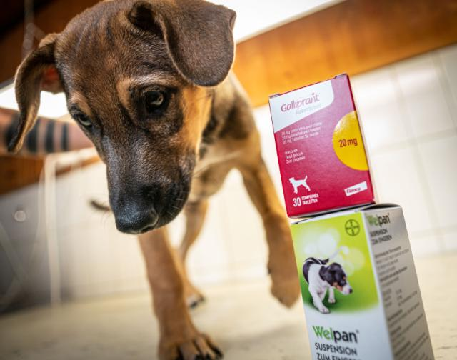 droga para próstata de perro